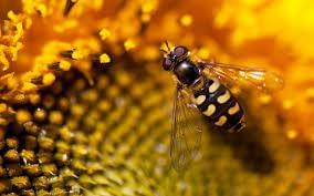 Waarom zijn bijen belangrijk?